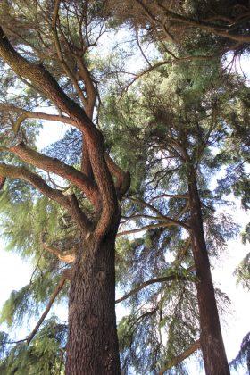 arbre parc sempione milano