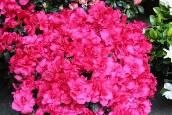 Bouquet de fleurs de couleur vive à Florence